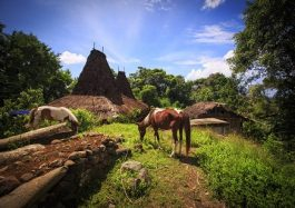 Waitabar Village Sumba